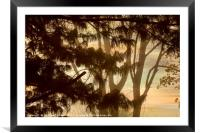 Misty Tangle, Framed Mounted Print