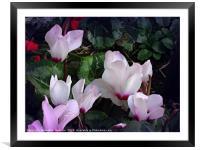 Spring Glory, Framed Mounted Print