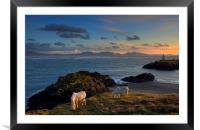 Llanddwyn Ponies, Framed Mounted Print