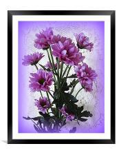 Chrysanthemums., Framed Mounted Print