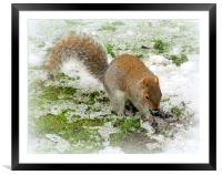 Snowy Squirrel, Framed Mounted Print
