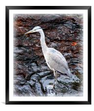 Heron at Hebden, Framed Mounted Print