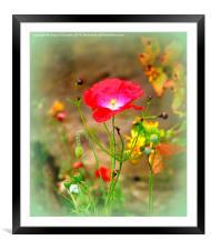 Poppy Time, Framed Mounted Print
