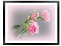 Miniature Pink Roses, Framed Mounted Print