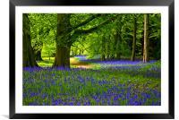 Bluebell Wood - Thorpe Perrow, Framed Mounted Print