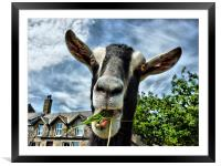 The Nosey Goat, Framed Mounted Print