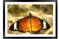The Butterfly resting, Framed Mounted Print