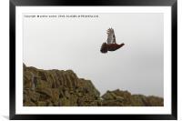 FLYING AWAY, Framed Mounted Print