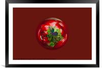 Butterfly Globe with red berries., Framed Mounted Print
