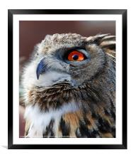 Eurasian Eagle Owl Canvases & Prints, Framed Mounted Print