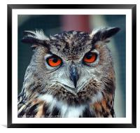 Eurasian Eagle Owl Canvases and Prints, Framed Mounted Print