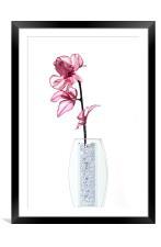 Pink Flower, Framed Mounted Print