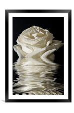 Rose Flood, Framed Mounted Print