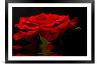 Red Rose Flood, Framed Mounted Print