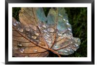 Raindrops., Framed Mounted Print