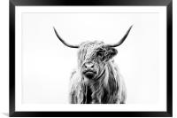 Portrait of a Highland Cow, Framed Mounted Print