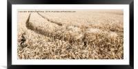 Wheat Field, Framed Mounted Print