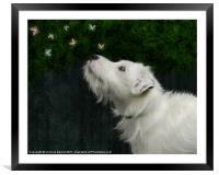 Jack Russell and Butterflies, Framed Mounted Print