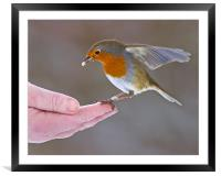 Bird in the hand, Framed Mounted Print