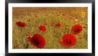 Poppy drift, Framed Mounted Print