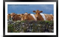 Moo-dy Blues, Framed Mounted Print