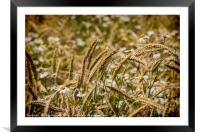 Summer Meadow, Framed Mounted Print