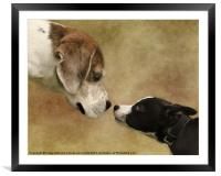 Nose To Nose Dogs, Framed Mounted Print
