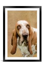 The Basset Hound, Framed Mounted Print