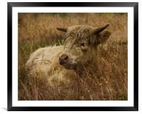 Camouflaged Cow, Framed Mounted Print