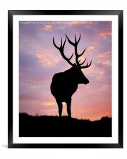 Stag And Sunset , Framed Mounted Print