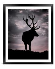 Stag And Sunset 2, Framed Mounted Print