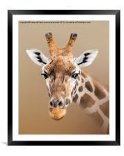 Beautiful Giraffe , Framed Mounted Print