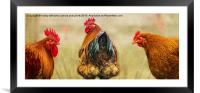 Hens. Hen Party. Look At The State Of That!, Framed Mounted Print