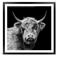 Highland Cow Portrait, Framed Mounted Print