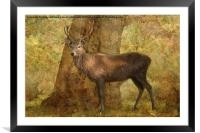 The Stag Party Collection. Autumn Shade, Framed Mounted Print