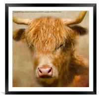 The Hairy Highlanders Collection. Dozy Highlander, Framed Mounted Print