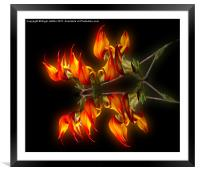 Flame Flower, Framed Mounted Print