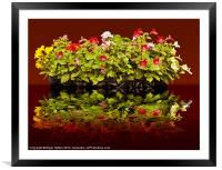 Flowers Reflections, Framed Mounted Print