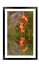 The Butterfly and the Rain Drops, Framed Mounted Print