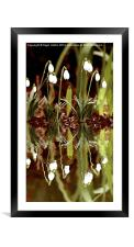 Snow Drop Reflections, Framed Mounted Print