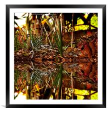 Daffodil Reflection, Framed Mounted Print