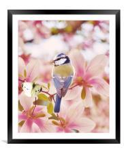Blossom buddies, Framed Mounted Print