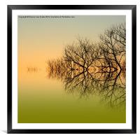 Olive branches, Framed Mounted Print
