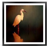 Midnight Egret, Framed Mounted Print