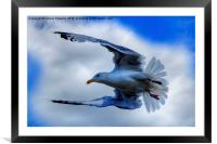 Seagull, Framed Mounted Print