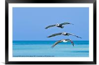Florida Pelicans Flying in Formation Over Atlantic, Framed Mounted Print