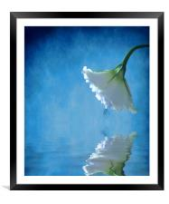 Lisianthus, Framed Mounted Print