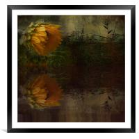 Sunflower Summer, Framed Mounted Print