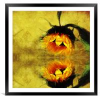 (Sunflower)- A Reflection of a Summer Day 2, Framed Mounted Print