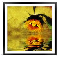Sunflower Reflection of a Summer Day (3), Framed Mounted Print